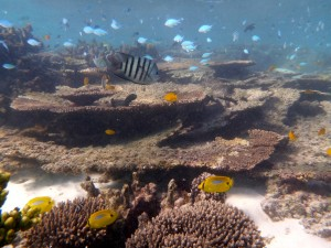 Snorkelling, Coral, Fish, Turquoise Bay, Exmouth, Western Australia, Ningaloo Reef, Exmouth Adventure Co