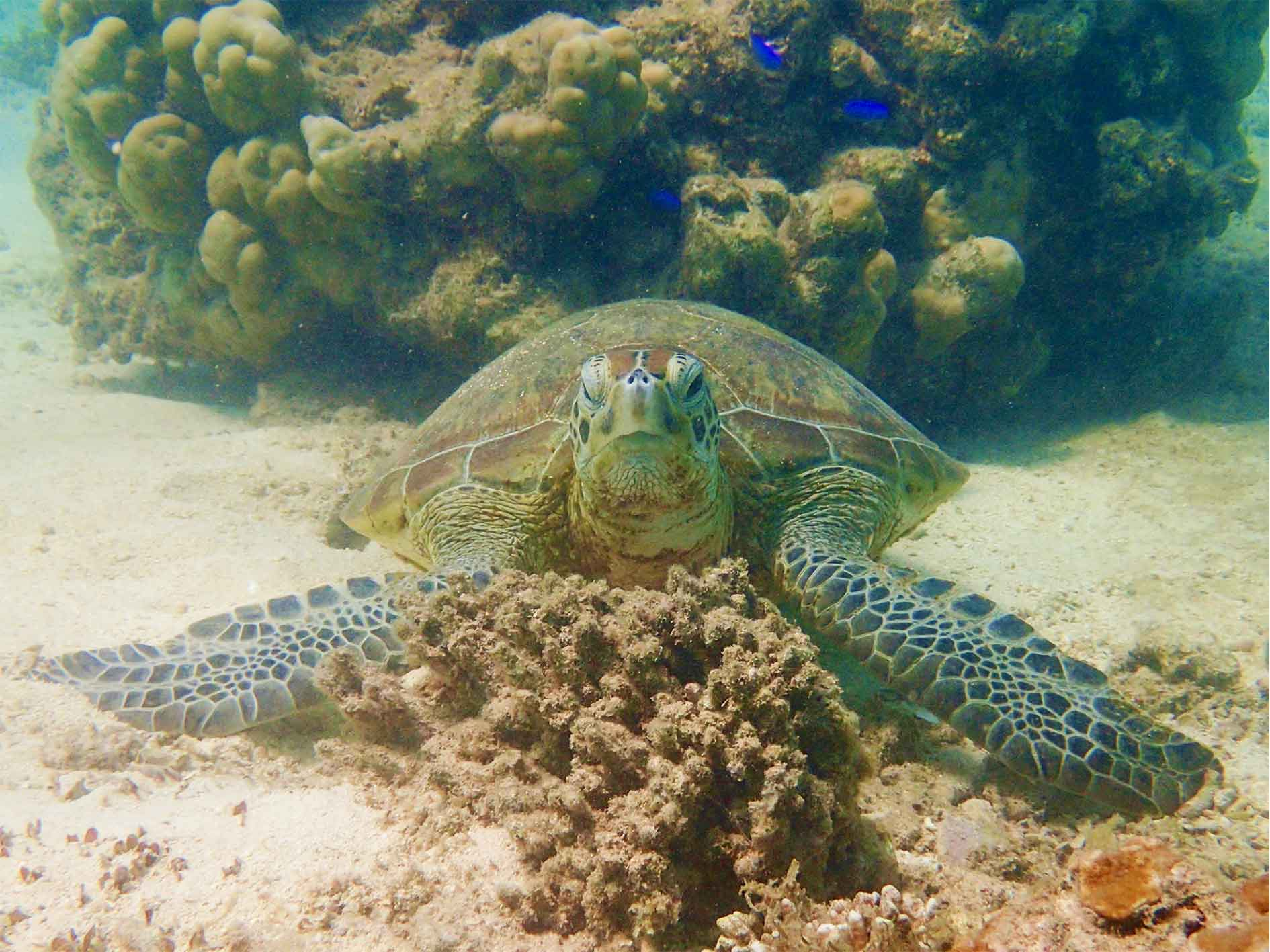 Turtle Tour, Sea kayak, Snorkel, Bundegi, Sanctuary Zone, eco tour, Exmouth, Western Australia, Ningaloo Reef