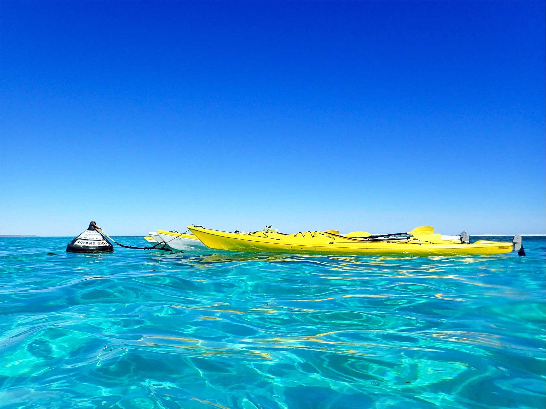 5 Day Ultimate Safari, Sea Kayak Ningaloo, multi day tour exmouth ningaloo, camping tour ningaloo, best tour exmouth, Whale Shark, sea kayak, snorkel, bush walk, base camp, eco tour, Ningaloo Reef, Exmouth, Western Australia