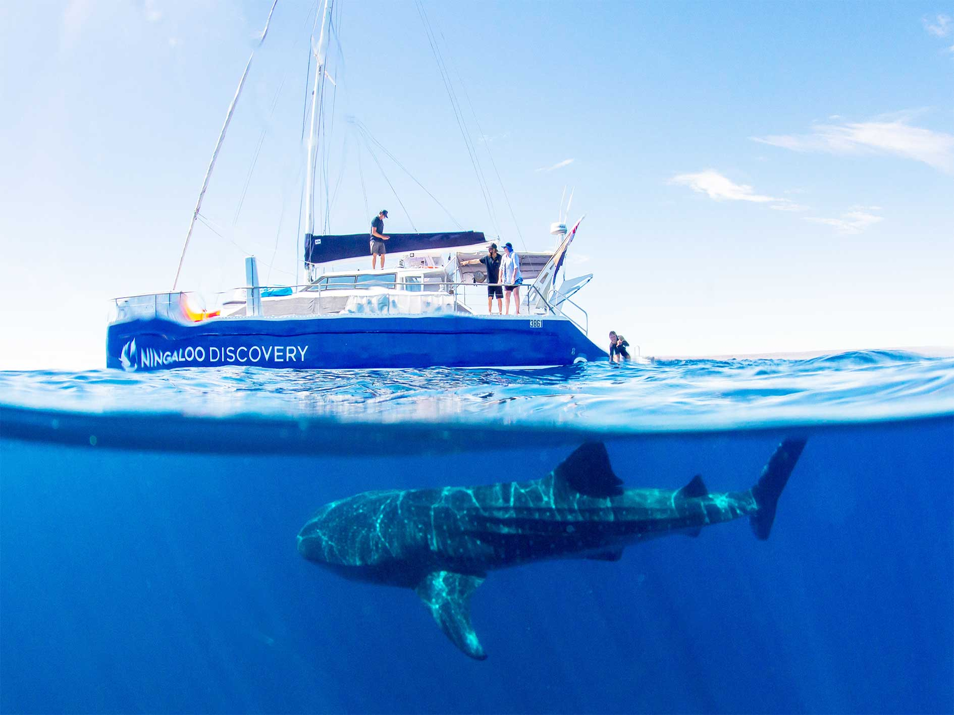 Whale shark, swim, eco tour, Whaleshark,  Ningaloo Reef, Exmouth, Western Australia, Exmouth Adventure Co, Our Partners