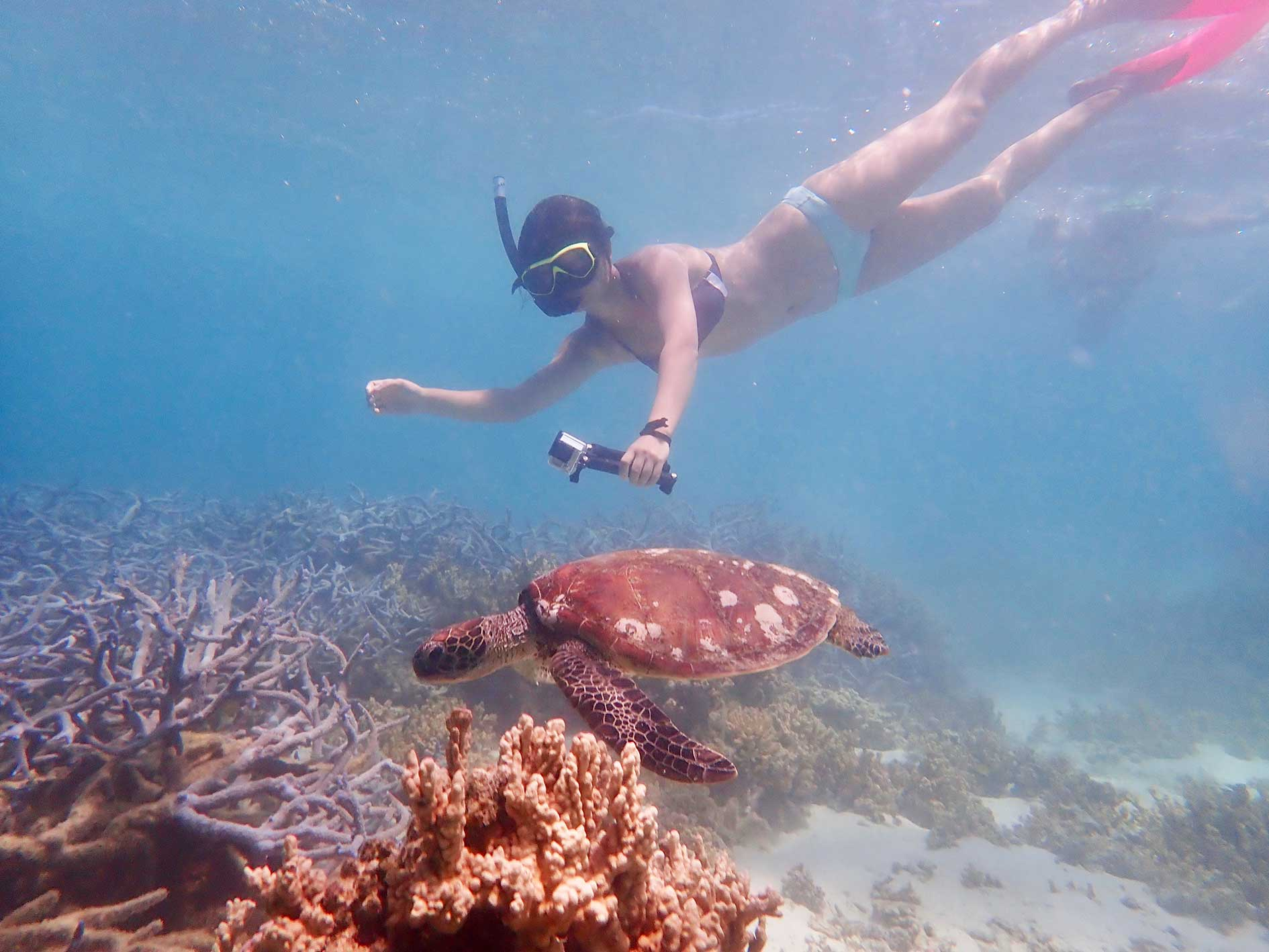 Turtle Tour, snorkel with turtles, Turquoise Bay, snorkel tour, guided snorkel tour, exmouth eco tours, exmouth adventure co