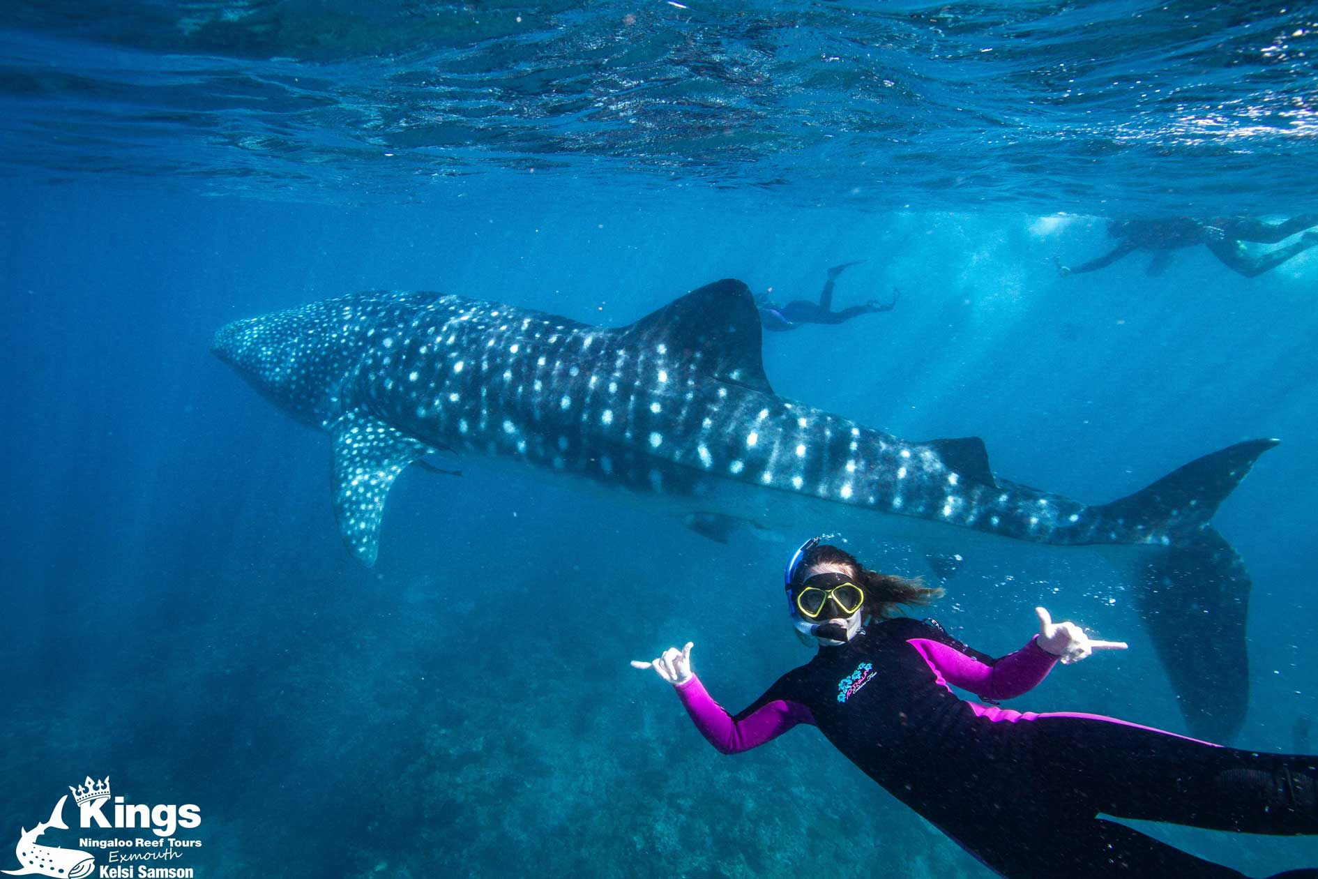 Swim or snorkel with Whale sharks in Exmouth, Ningaloo Reef. A girl swims with a Whale shark on tour with Kings Ningaloo Reef in clear blue water